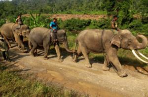 大象巡逻队