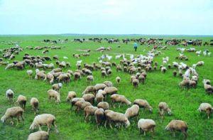 吉林省西部草场