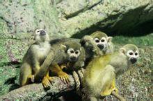 泉城海洋极地世界松鼠猴