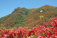 大围山植物