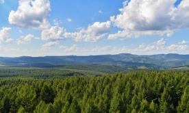 China leads world with 69m hectares of planted forest