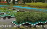 """污水处理得更""""干净"""",江苏这些生态安全缓冲区风景美成画"""