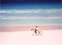 巴哈马群岛上哈勃岛的粉色沙滩