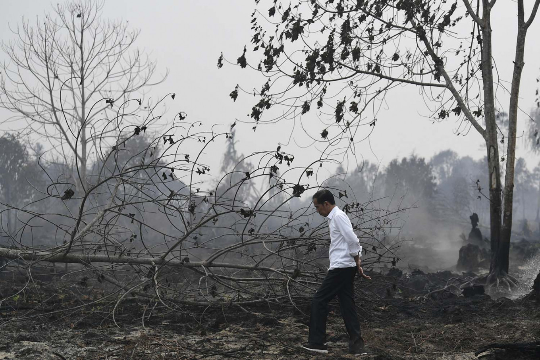 印尼烧芭引燃大火 周边部分国家游客取消行程