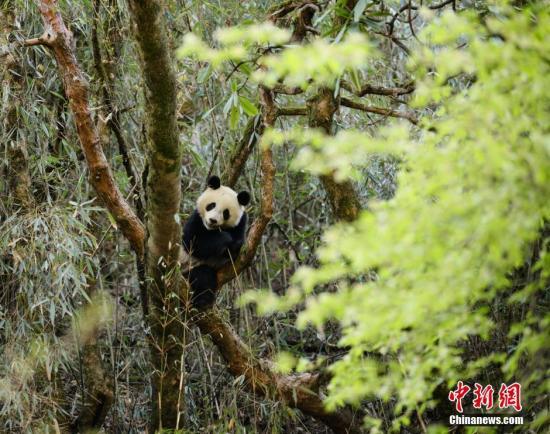 长江经济带120处国家级自然保护区管理评估结果出炉