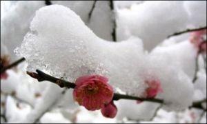 大雪节气期间的降雪