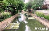 """内秦淮中段断面清淤主体完成,未来将打造成一座""""水系流域花园"""""""