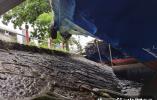 2天损失1.8亿元,千岛湖旅游业受汛情遭重伤!网友:期待顶流归来