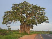 安哥拉郊外一景
