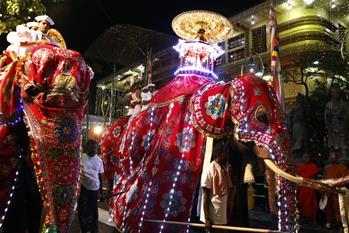 世界大象日:让我们一起来关心人类的大朋友