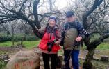 情人梅下合个影 !南京耄耋老人刘健芝、祁恩芝夫妇连续60多年到梅花山赏梅