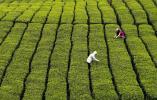温州文成粉丝、杨梅入选中欧第二批地理标志保护清单!