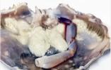 """梭子蟹里面有粉色""""虫子"""" 能吃吗?原来是""""茗荷"""""""