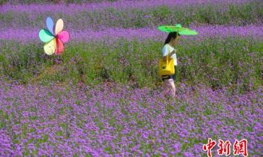 Citizens visit sea of flowers in N China's Shanxi